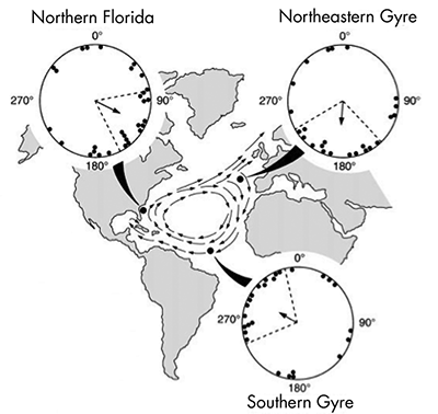 Figure 1. Reproduced from Lohmann, et al. (2001), summarizing their results.